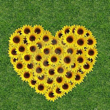 dei fiori significato dei fiori nel matrimonio lemienozze it