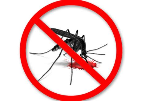 top 10 homemade organic mosquito repellents home