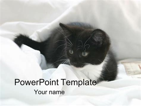 Kitten Powerpoint Template Cat Powerpoint Template