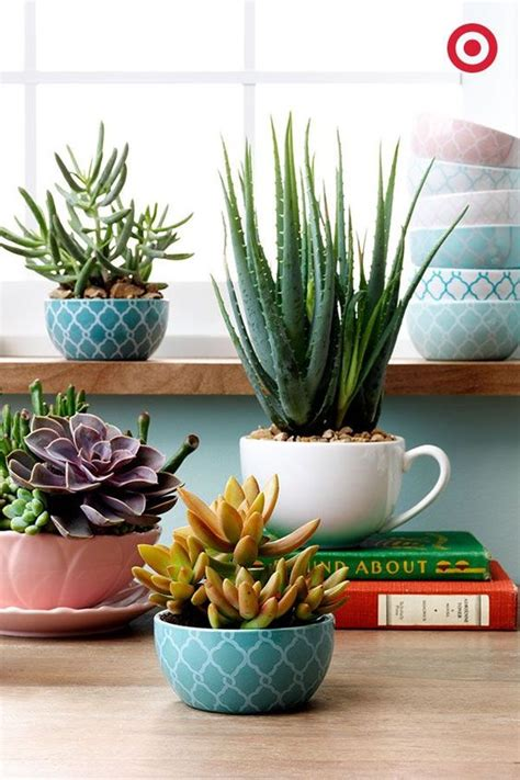 cute succulents cute mini bowls and classic mugs are unexpected ways to
