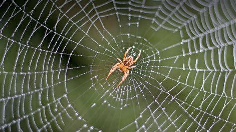 Spider Search Spider San Diego Zoo Animals Plants