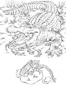 realistic animal coloring pages realistic alligator coloring pages realistic coloring pages