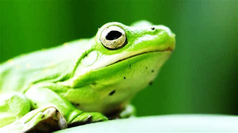 gif wallpaper photobucket frog photo by newbeginnings2 animated gif 2288931 by