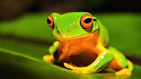 imagenes animales hd 1080p imagenes de animales hd im 225 genes taringa
