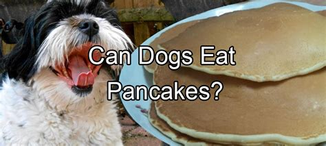 can dogs pancakes pethority dogs the authority for all your needs
