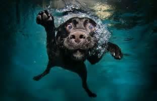 black friday amazon kindle fire underwater dog photography pics