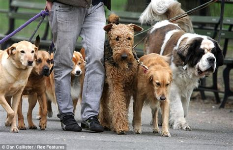 how to become pack leader pack leadership dogs best friend of orlando central florida