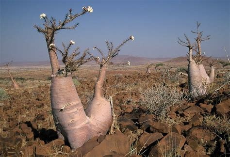 Trees From Around The World by 10 Of The Strangest Trees Around The World Page 4 Of 5