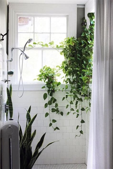 plants for bathroom with no windows vines shower square white tile window in shower snake
