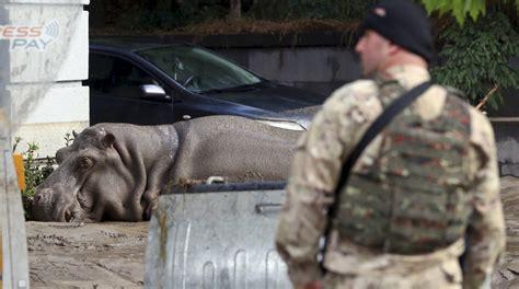 cuc tras de animales del la incre 237 ble fuga de animales de un zool 243 gico tras inundaciones foto galeria 1 de 9 el