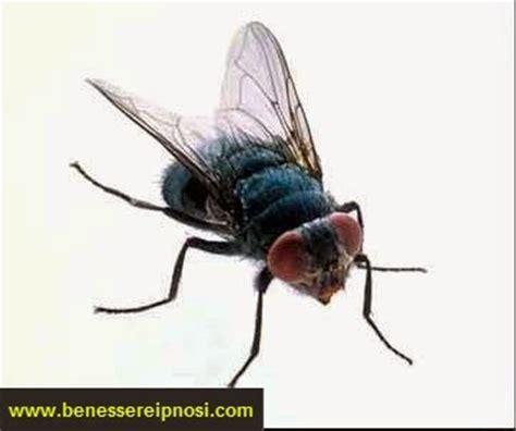 sognare mosche in casa che cosa signifca sognare le mosche significato dei