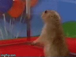 Memes Gifs - dramatic chipmunk gif find share on giphy