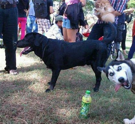 best photobomb pictures these 17 animal photobombs are hysterical 8 is my