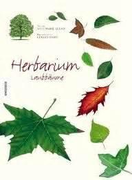 Word Vorlage Herbst Herbarium 20er Vorlagen Und Anleitungen