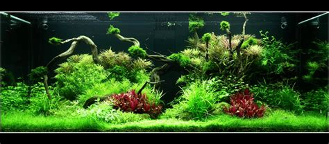 Que Faut Il Pour Un Aquarium by Comment R 233 Aliser Un Aquarium Aquascape Pour Un 300 Litres