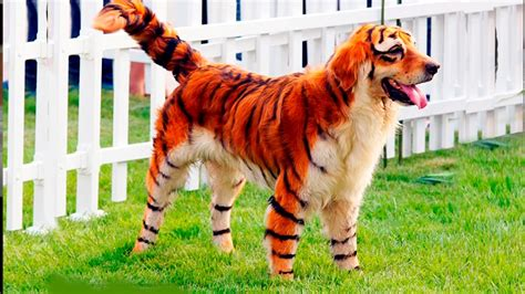 what breed are you looking breeds www pixshark images galleries with a bite