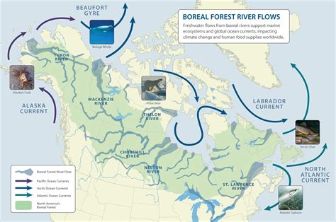 canadian map rivers international boreal conservation science panel