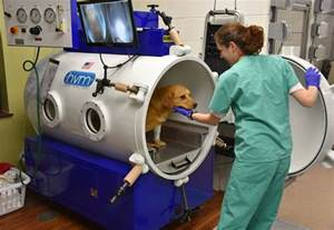 Cortical Blindness Treatment Hyperbaric Oxygen Therapy Veterinary Specialty Center