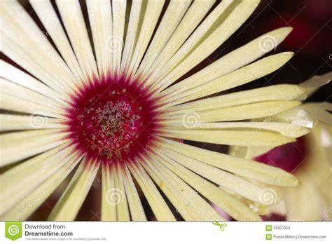 fiore bianco fiore bianco fotografia stock immagine di