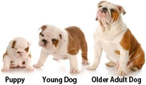 what age to start a puppy how to potty your puppy fast at home