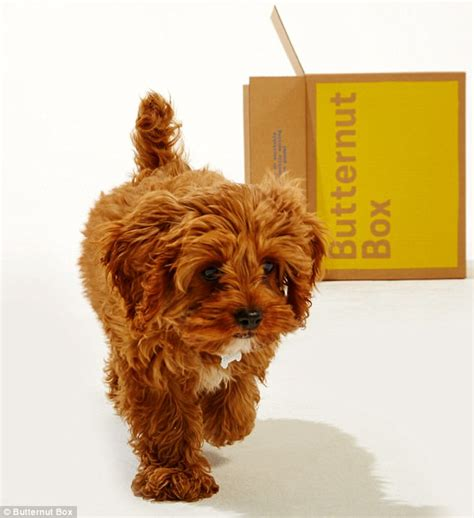puppy delivery service ex traders start butternut box delivery service for dogs ethionation