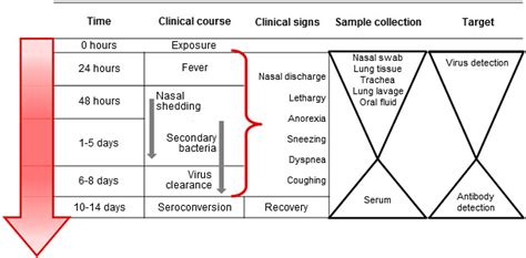 swine influenza detection and diagnosis of influenza a