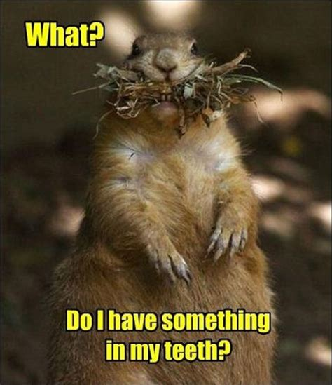 Funny Squirrel Memes - 30 funny animal captions part 5 30 pics funny animal