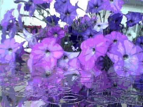 imagenes bellas lloviendo gifs animados de petunias gifmania