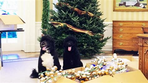white house dogs bo and sunny first dogs bo and sunny help deck the white house halls for christmas today com