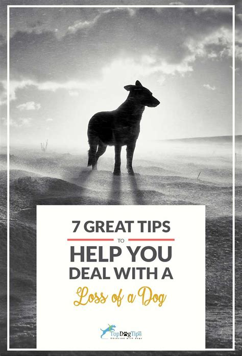 7 Tips On Dealing With by 7 Tips To Help You Deal With The Loss Of A Pet Top Tips