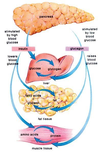 diabetes diagram diabetes preventing health care epidemic page 1