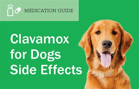 clavamox dosage for dogs amoxicillin side effects in dogs mobic medication side effects