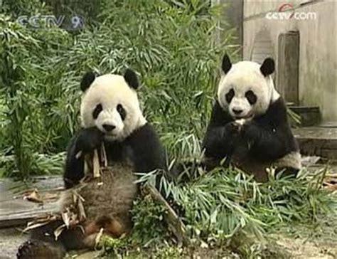 Perangko Taiwan Endangered Mammals Postage Sts Pictorial mainland taiwan animal gifts china org cn