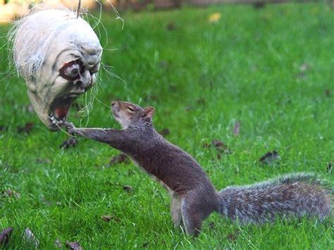 squirrel hung by nuts squirrel vs mask photos epidemicfun