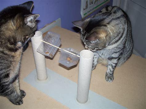katzenbeschaeftigung selber basteln dansenfeesten