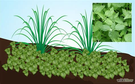 what plants keep mosquitoes away use plants to keep mosquitoes away yards plants and gardens