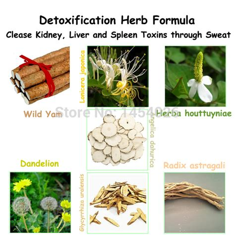 Herbs To Detox Liver And Kidneys by Unique Herbs Small Orders Store Selling And