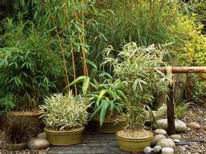 asian inspired container garden hgtv