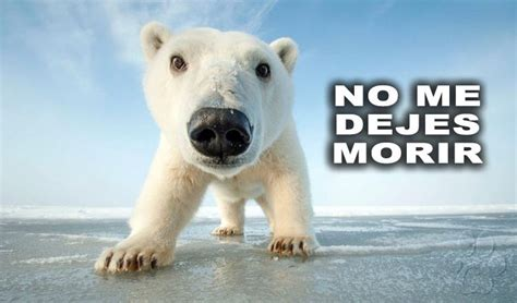 imagenes de animales nuevas especies por nuestra culpa la mitad de las especies de animales
