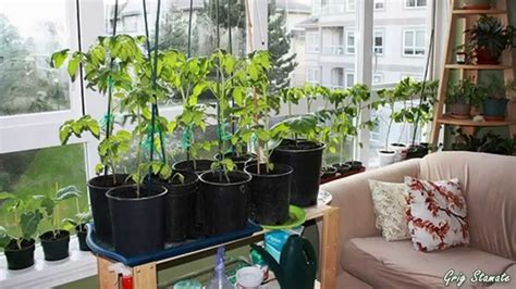 Indoor Gardens for Small Apartments   Suspended and