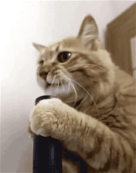 Cat Vaccum vacuum cat cat gifs