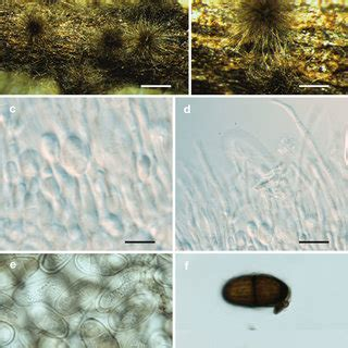 symptoms  collar  root rot  jatropha curcas