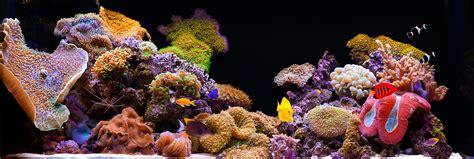 Soft Aquarium saltwater coral aquarium aquarium design custom