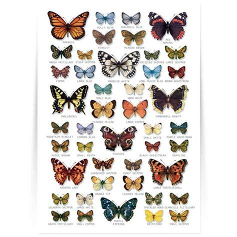 Die Sch Nsten Schmetterlinge 4950 by Schmetterlingsarten In Deutschland Forscher Vielfalt Der
