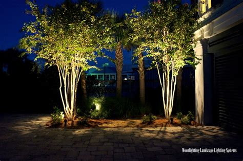 myrtle tree lighting an oceanfront oasis the lights modern landscape