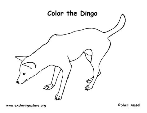 exploring nature coloring pages image gallery dingo coloring