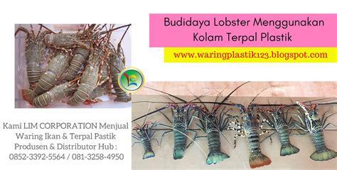 Harga Waring Kolam Ikan budidaya lobster menggunakan kolam terpal plastik jual