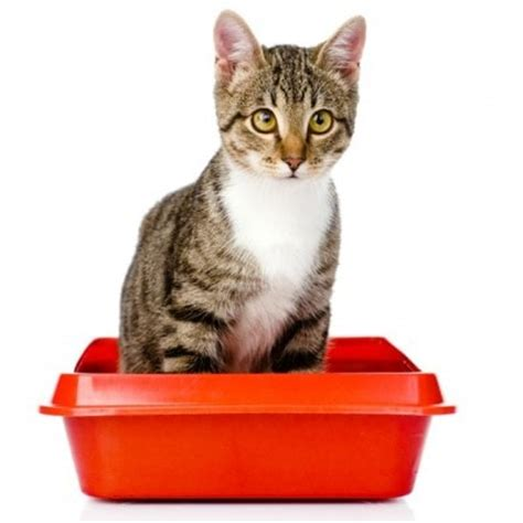 box inspector and other important for cats books the scoop about cat the conscious cat