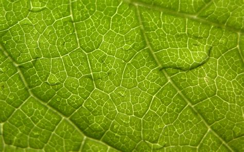 free green green leaf wallpapers green leaf stock photos