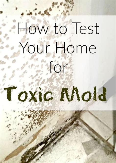 How To Detox After Living In Mold by Wondering How To Test Your Home For Mold Do You